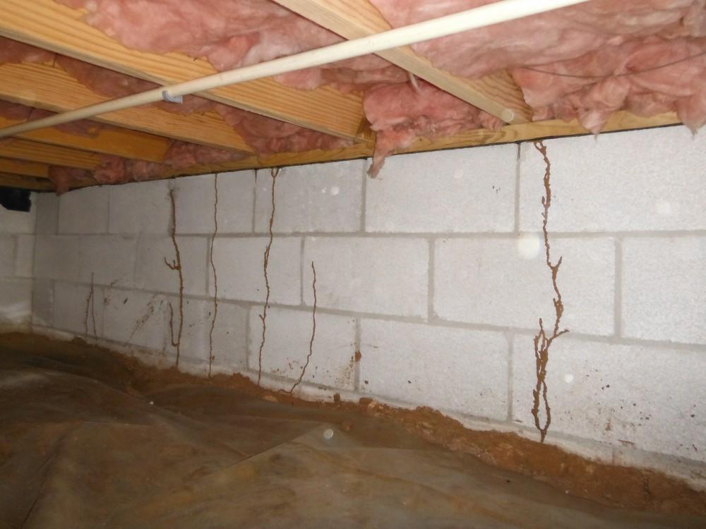 Termites Shoals Pest Control